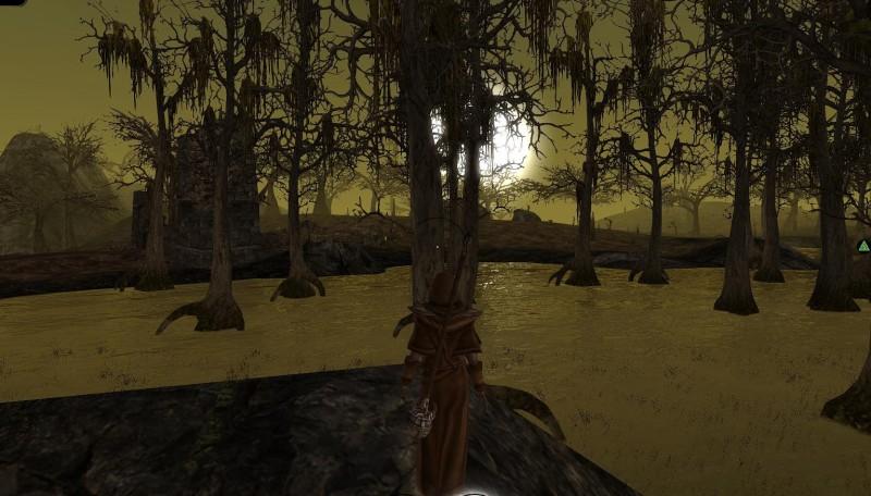 DFUW swamp