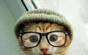 Hipster Kitty.. Your argument is invalid